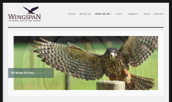 Wingspan Rotorua branding and tourism web design
